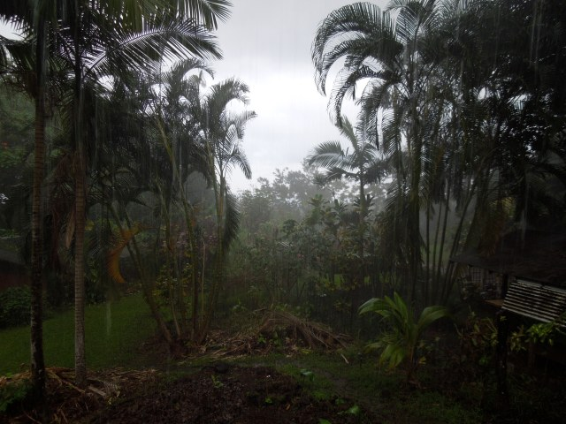 Rain in the jungle