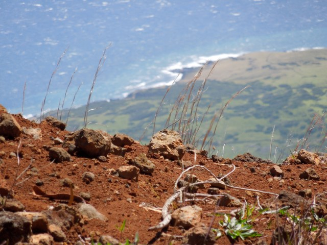 We caught a glimpse of the red earth that fills much of The Haleakala Crater