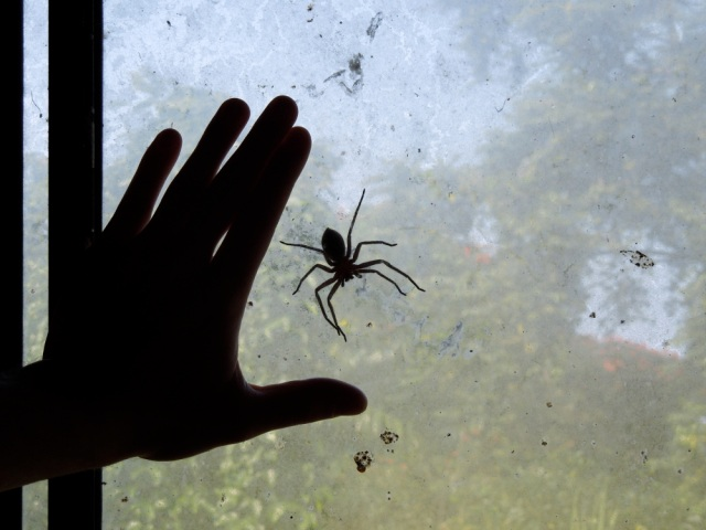 You can picture the unparalleled beauty, so here's a photo of a spider as big as the palm of your hand. Nature!