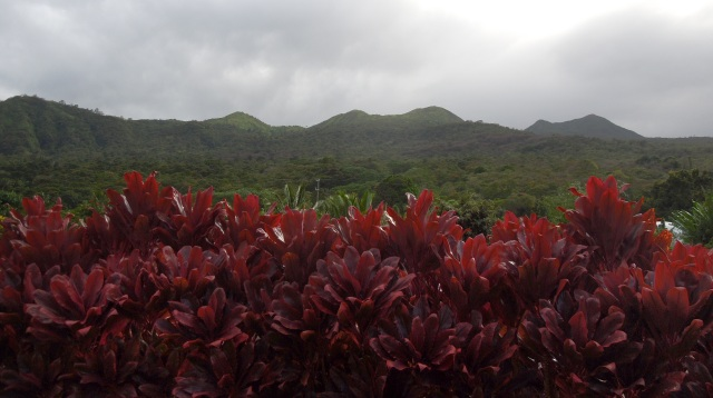 Red Ti plants with a mountain backdrop