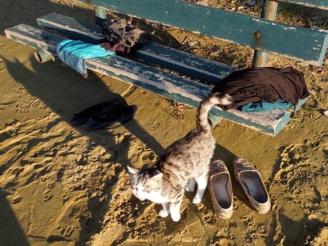 KittenFriendConcerned