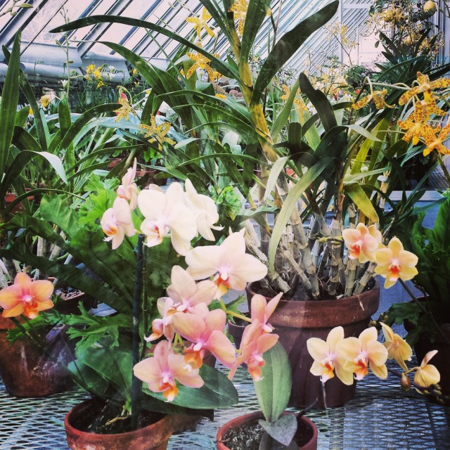 The greenhouse at the Isabella Stewart Gardner Museum
