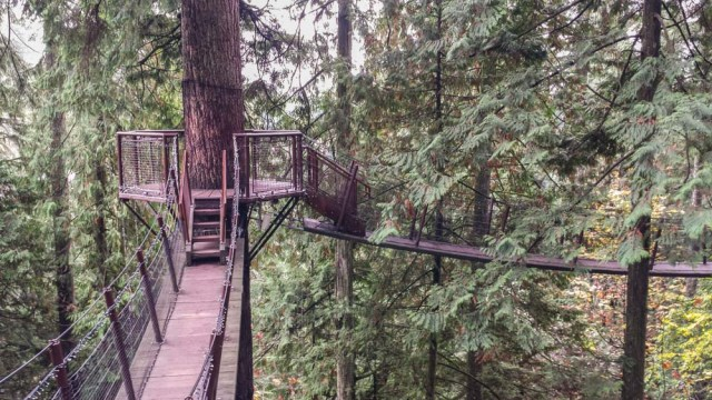 Capilano Suspension Bridge Park, Vancouver, October 2015